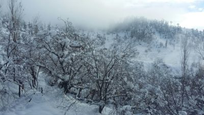 Heavy Snowfall Causes Havoc To North Kashmirs Fruit Industry