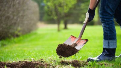 Kashmir Youth Volunteers For Regaining Green Cover of Pir Panjal Forests