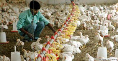 The 'Harmful Colistin' Found In Indian Farm Chicken